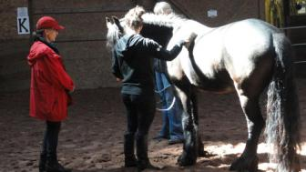 LSBE healthcare students with horse